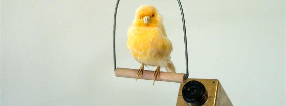 Header CES Kunstpreis: Leonie Nowotsch, Der moderne Vogelkäfig